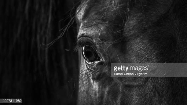 close-up of a horse - horse racing stock pictures, royalty-free photos & images
