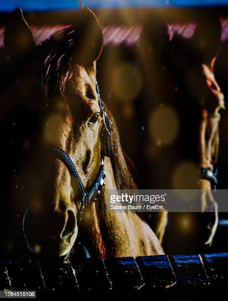 close-up of a horse - baum stock pictures, royalty-free photos & images