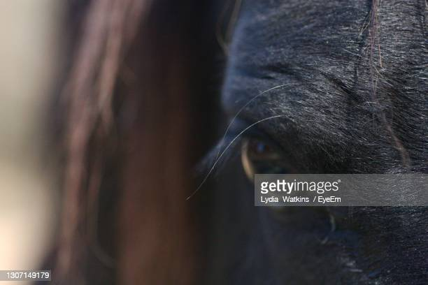close-up of a horse - animal head stock pictures, royalty-free photos & images