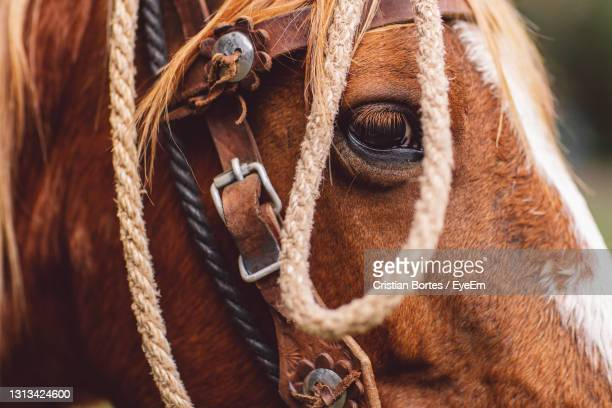 close-up of a horse - bortes stock pictures, royalty-free photos & images