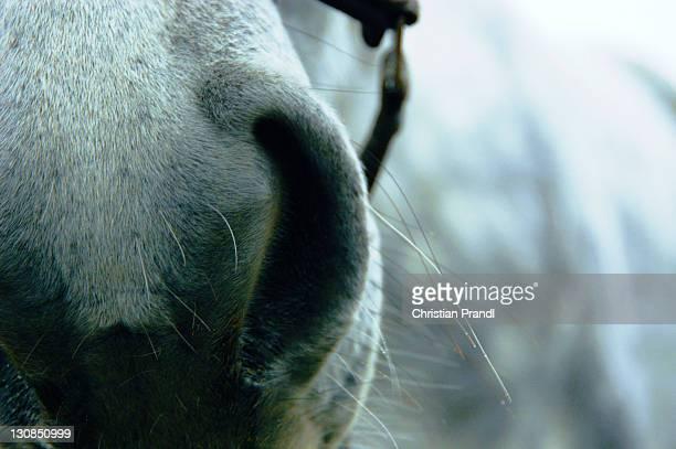 A Closeup of a Horses Nostrils