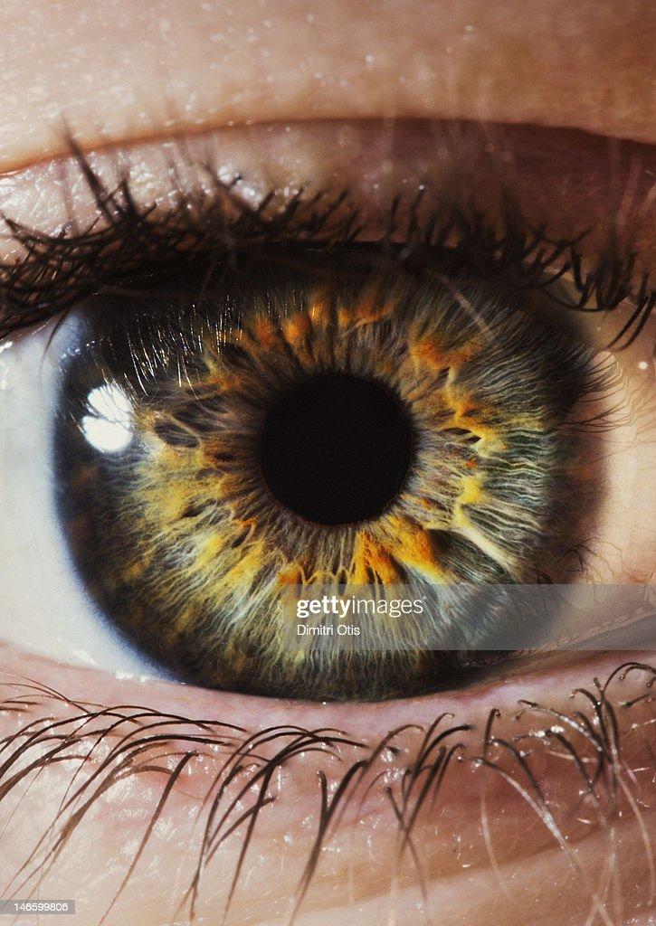 Close-up of a human eye and iris : Stock Photo