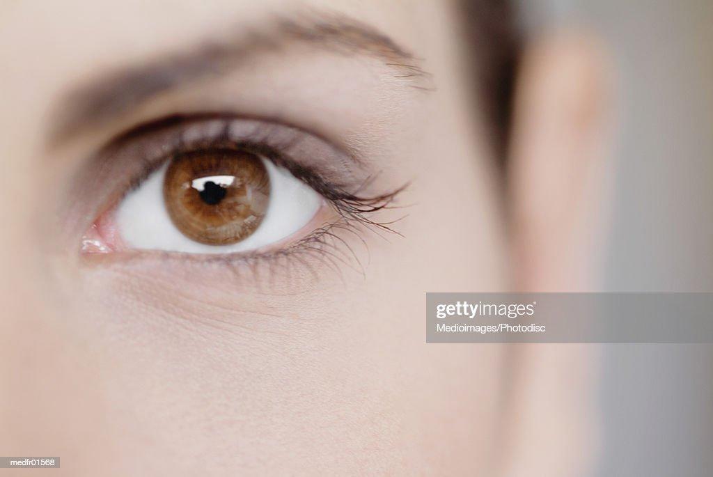 Close-up of a human eye : Stock Photo