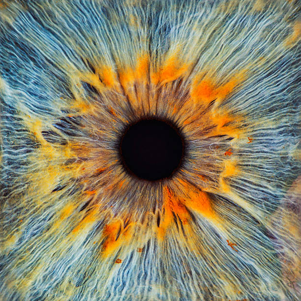 Close-up Of A Human Eye, Pupil And Iris Wall Art