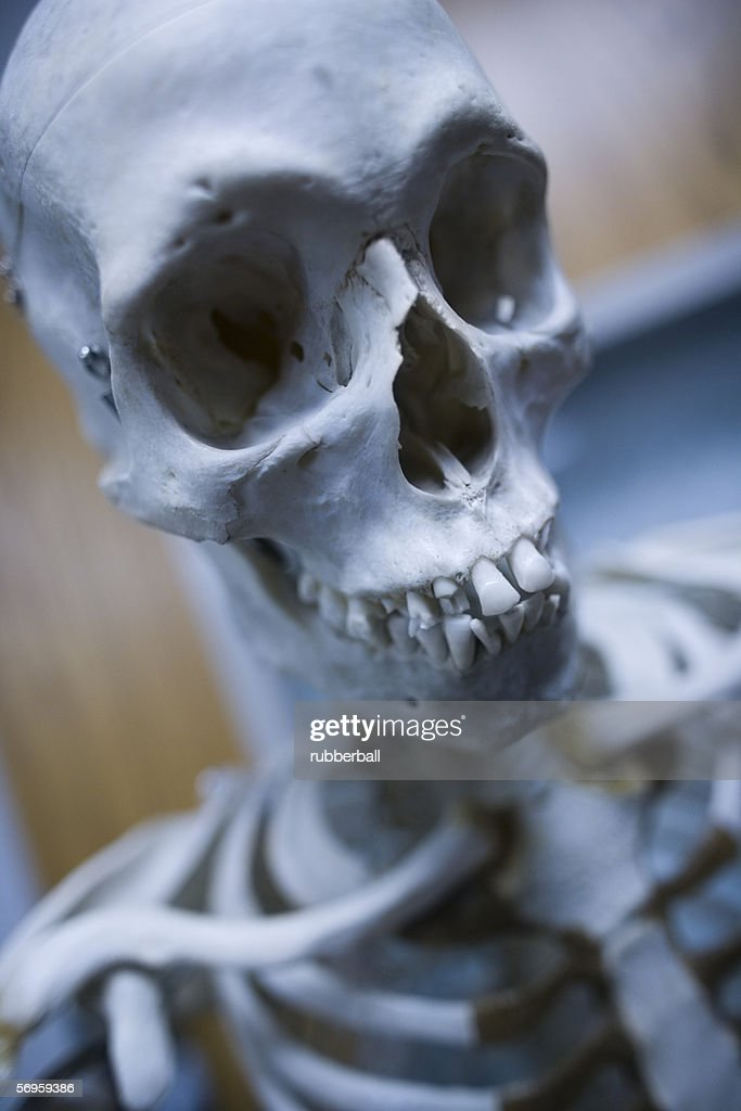Closeup Of A Human Skeleton Stock Photo Getty Images