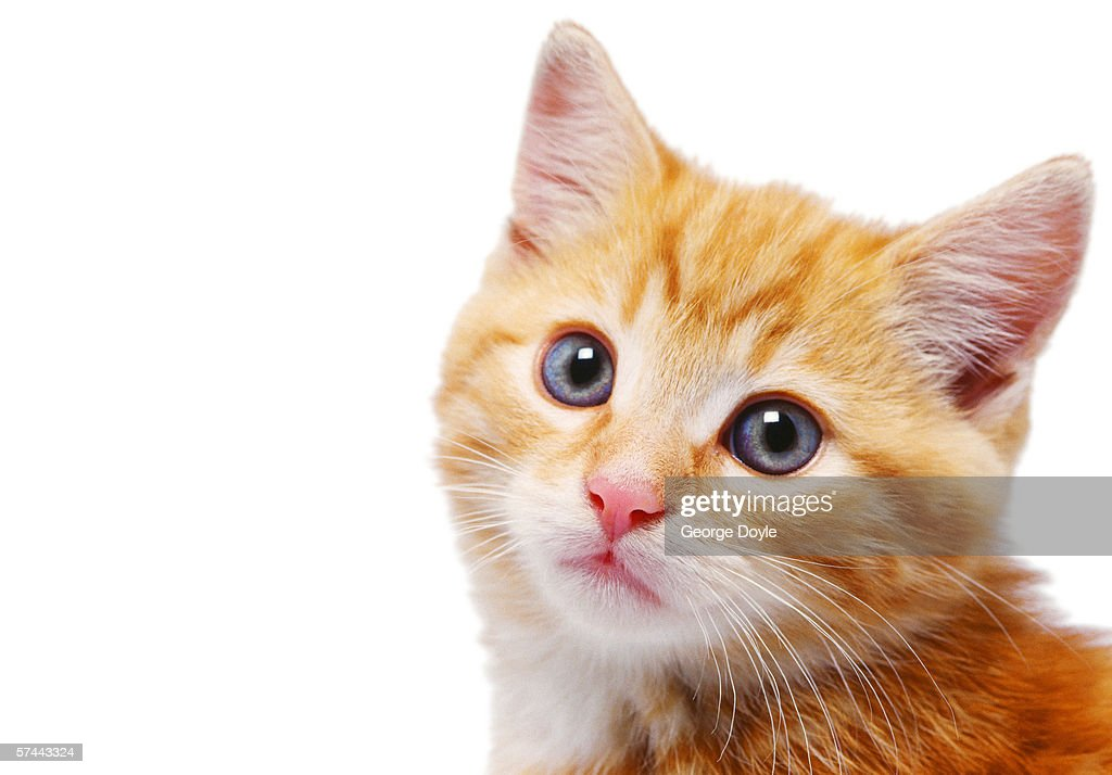 close-up of a kittens face : Stock Photo