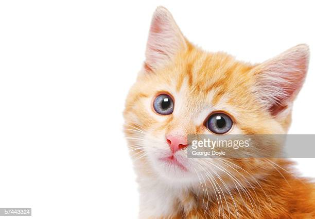 close-up of a kittens face