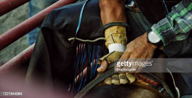 close-up of a latino bull rider's hands adjusting his grip on the rope while sitting atop a bull before competing in a bull riding event - bull riding stock pictures, royalty-free photos & images