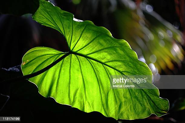 close-up of a leaf - martial stock pictures, royalty-free photos & images
