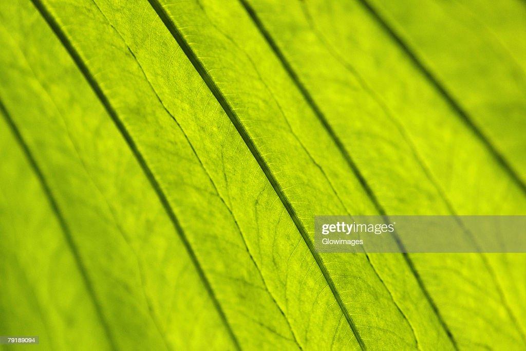 Close-up of a leaf : Foto de stock