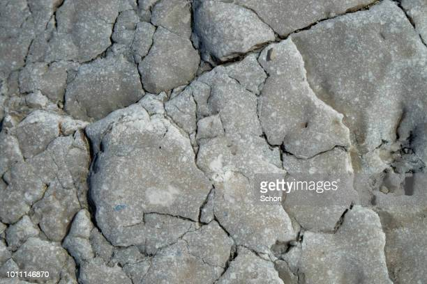 close-up of a limestone with cracks in daylight - gotland bildbanksfoton och bilder