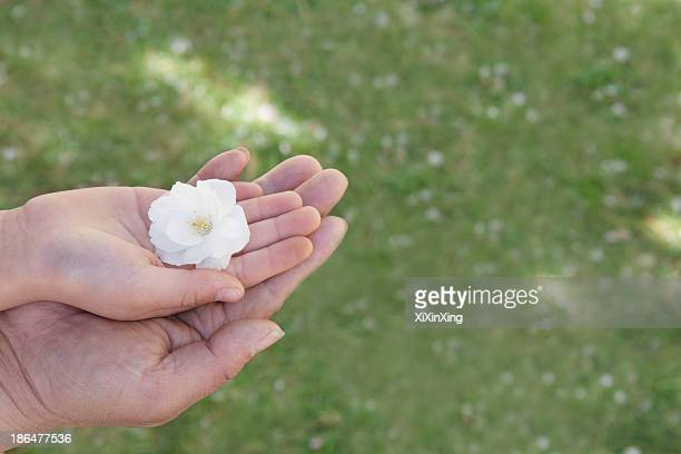 Close-up of a little girls hand and her fathers hand on top of each other holding a cherry blossom