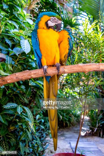 Close-Up Of A Macaw Perching On Branch