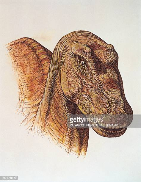 Closeup of a maiasaura's head