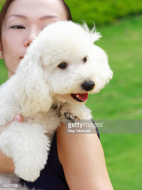 close-up of a mid adult woman holding a miniature poodle - barboncino nano foto e immagini stock