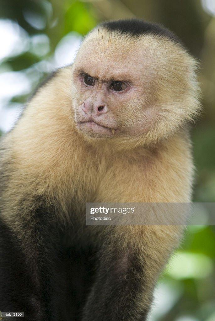 Close-up of a monkey : Foto de stock