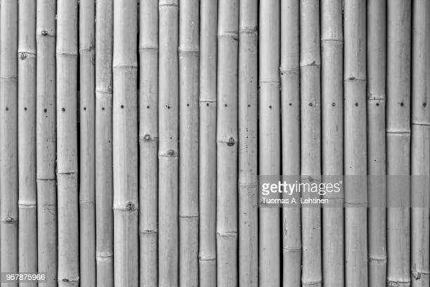 Close-up of a natural bamboo wall background in black and white