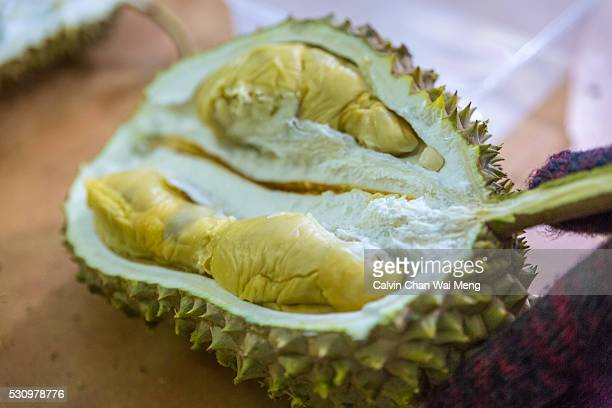 Close-up of a opened durian fruit with its fresh during fruit exposed