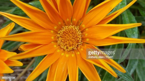Close-up of a orange flower