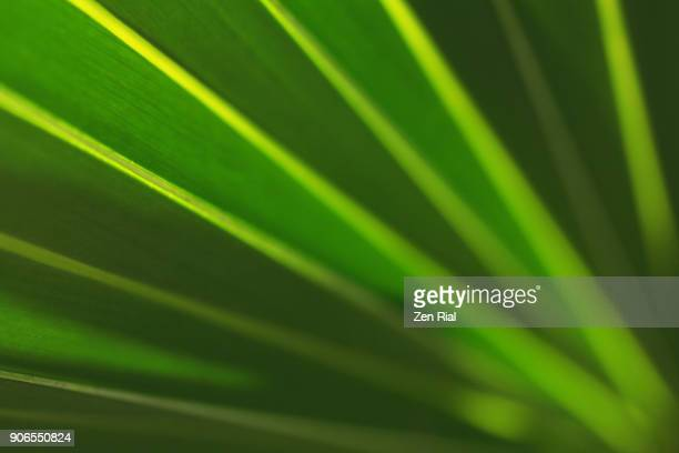 close-up of a palm frond - tropical bush stock photos and pictures