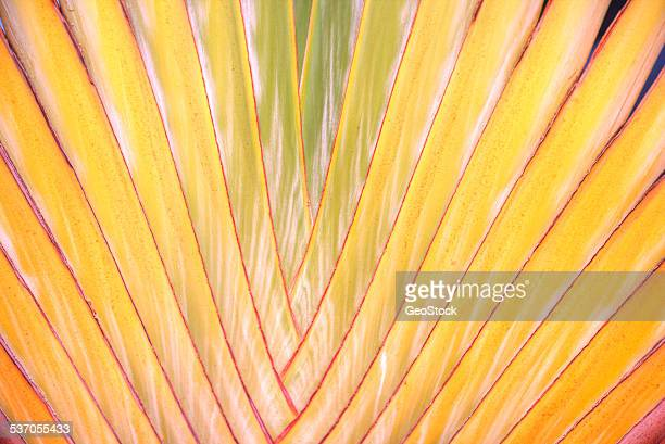 Close-up of a palm in Hawaii