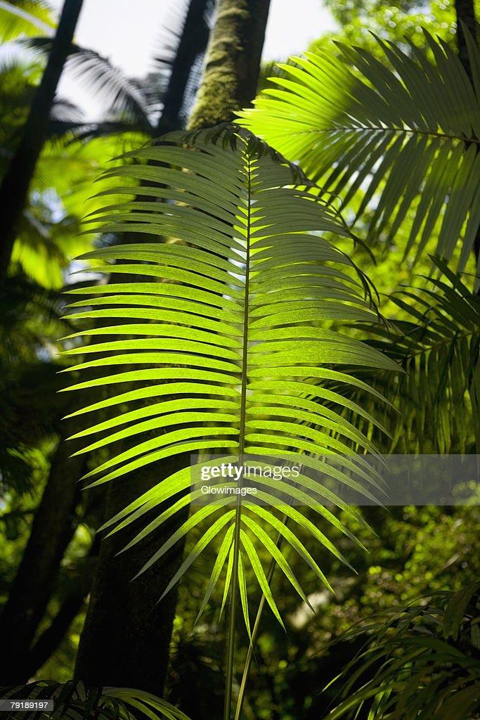 Close-up of a palm leaf in a botanical garden, Hawaii Tropical Botanical Garden, Hilo, Big Island, Hawaii Islands, USA : Foto de stock