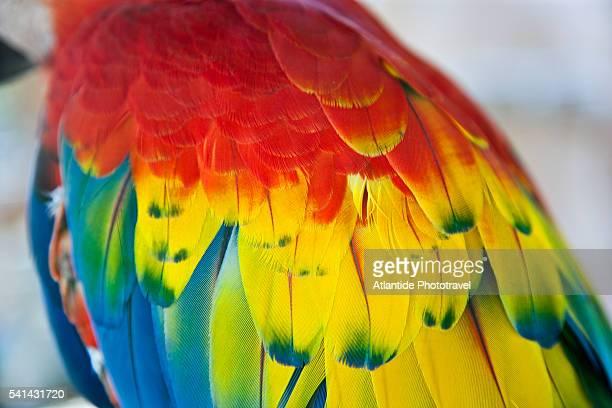 close-up of a parrot - papagayo guanacaste fotografías e imágenes de stock