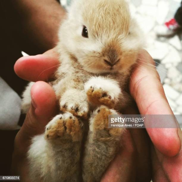Close-up of a person's hand holding baby rabbit