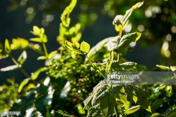 close-up of a plant - basingstoke stock pictures, royalty-free photos & images