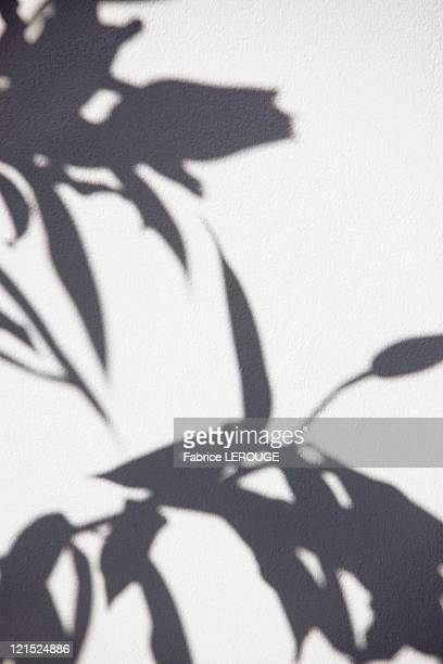 close-up of a plant shadow on a wall - schaduw stockfoto's en -beelden