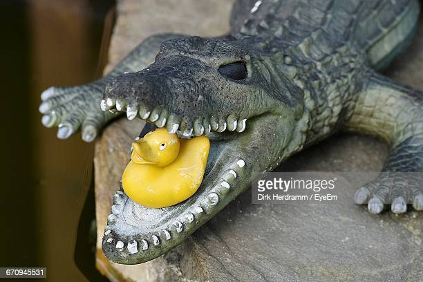 Close-Up Of A Plastic Duck In Crocodiles Mouth