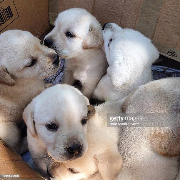 Close-Up Of A Puppies In A Box For Sale
