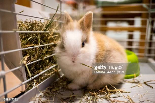 close-up of a rabbit in cage - treviso italy stock pictures, royalty-free photos & images