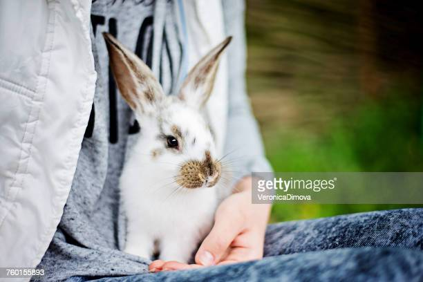 close-up of a rabbit sitting on a girls lap - veronica gentili foto e immagini stock