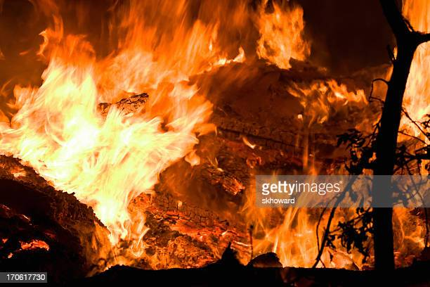 Close-up of a raging fire destroying trees