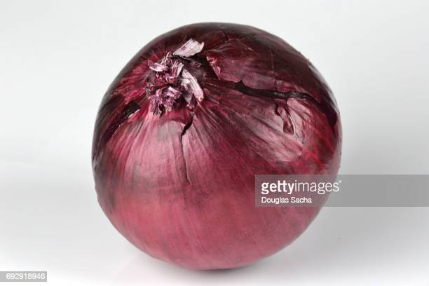 Close-up of a Red Burgundy Onion on a white background (allium cepa)