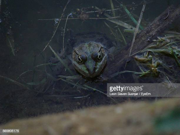 Close-Up Of A Reptile In Water