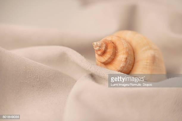 Close-Up of a shell, Adriatic Sea, Croatia, Europe
