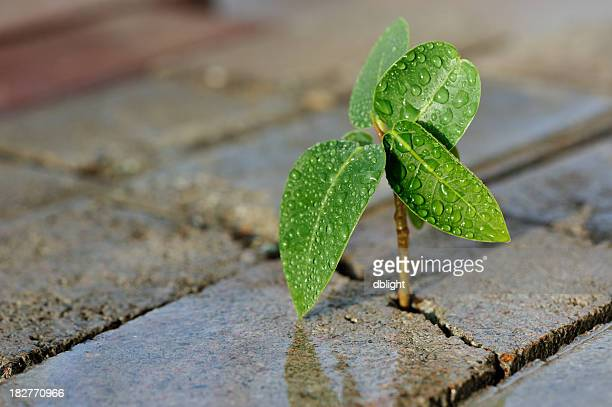 close-up of a small plant growing through bricks - endurance stock photos and pictures