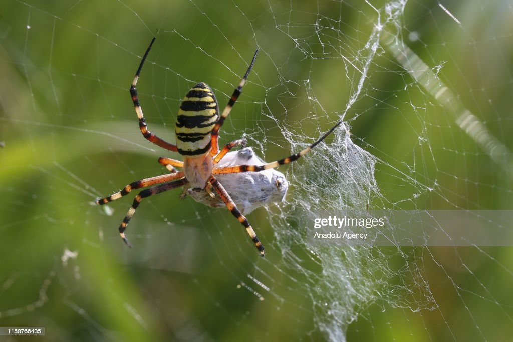 Small living things of nature : News Photo
