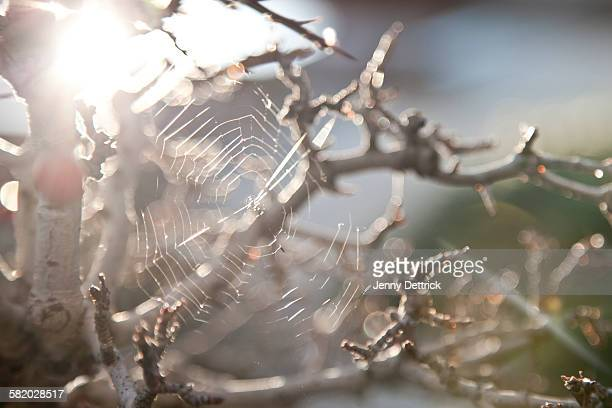 Close-up of a Spider Web on Branches