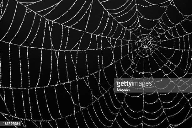 Close-up of a spiderweb silk details on black background