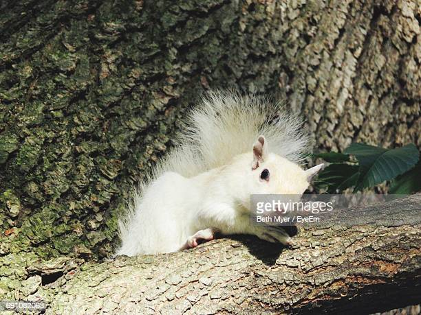 close-up of a squirrel - animal internal organ stock photos and pictures