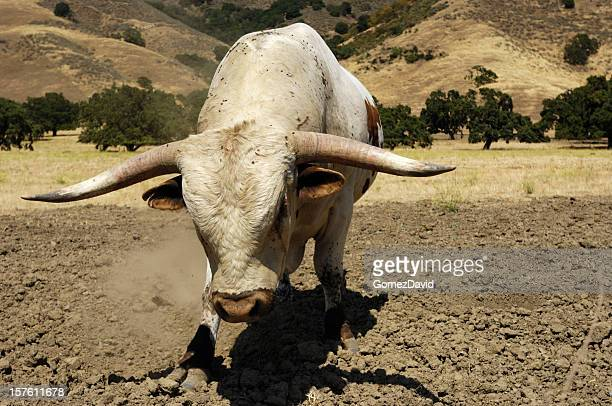 close-up of a texas longhorn bull - texas longhorn cattle stock photos and pictures