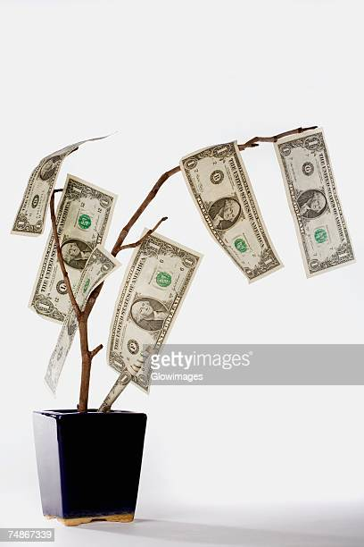 close-up of a tree with american dollar bills - money tree stock photos and pictures