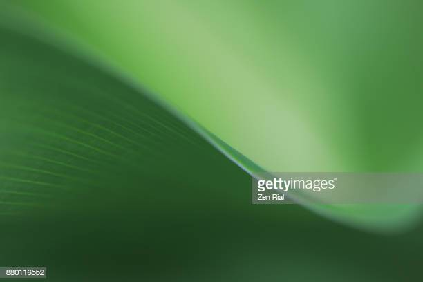 Close-up of a tropical leaf- abstract and green