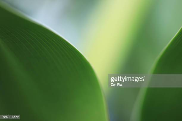 close-up of a tropical leaf- abstract and green - zen rial stock photos and pictures
