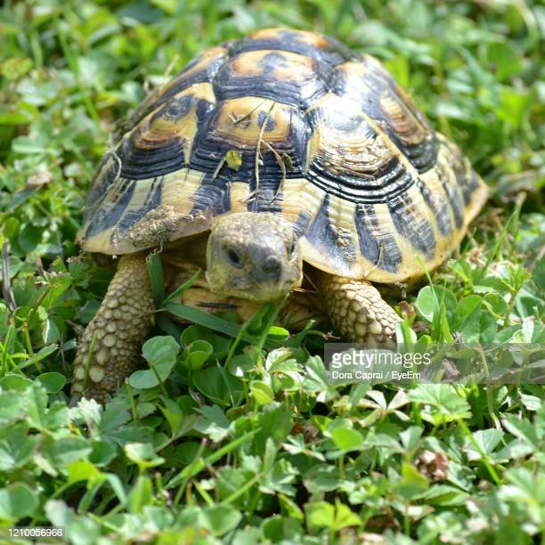close-up of a turtle in the ground - um animal - fotografias e filmes do acervo