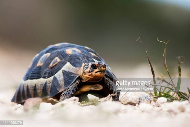 close-up of a turtle - um animal - fotografias e filmes do acervo