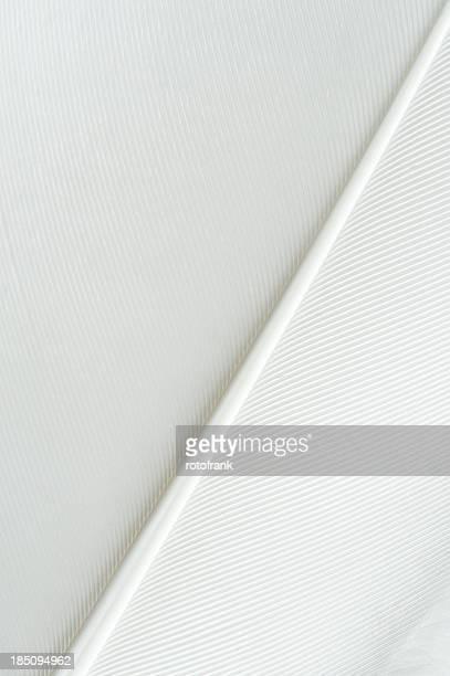 Gros plan d'une plume blanche